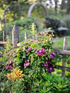 Clematis, an adept climber, plays well with oriental lilies.