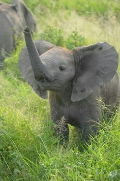 Is there anything cuter than a baby elephant? I think not!