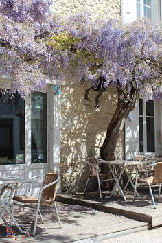 藤の花、カフェのテラス プロヴァンス                                                       …