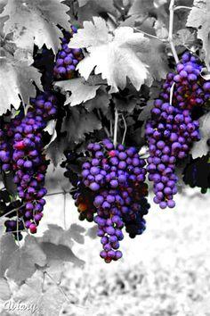**Hanging Grapes