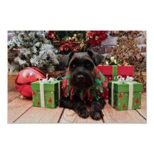 christmas schnauzer - Bing Images