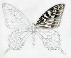Butterfly Drawings in Color | ... it up with colored pencils or simply draw it only by graphite pencil