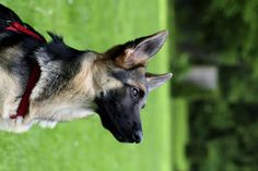 Is your dog bored? Try these 5 new tricks with her!