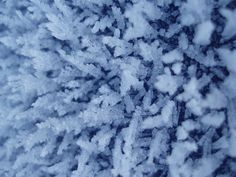 ice_frost_crystals_pc218262