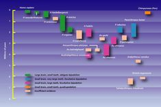 Timeline of hominid species