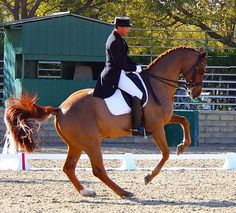Vaya Con Dios performing pirouette ridden by Steffen Peters in Intermediaite I at Mid Winter Dressage Fair CDI3*.