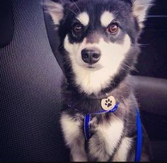 I still like the fact that Liam named his dog after a character in Thor. My names Loki, maybe you've heard of me?