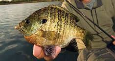 When it comes to the ultimate setup for spring and summer panfish, it's hard to beat a nightcrawler, hook, split shot, and bobber. But, there are some serious advantages to fishing for bluegills, crappies, and perch with artificial baits. You can cover more water quickly, and also avoid the little fish that are so good at robbing live bait rigs. So with the warm panfishing months of summer on the way, we rounded up the 15 the best panfish lures of all time.
