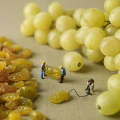 Funny pictures about How Grapes Are Really Made. Oh, and cool pics about How Grapes Are Really Made. Also, How Grapes Are Really Made photos. Miniature Photography, Food Photography, Creative Photography, Amazing Photography, Whimsical Photography, Micro Photography, Learn Photography, Concept Photography, Miniature Food