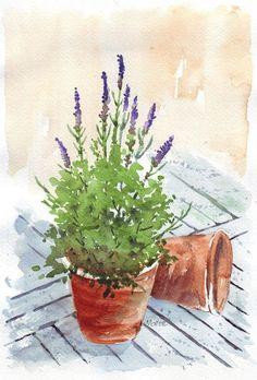 Maree Clarkson :: ART & CREATIVITY : My Sketchbook: Lavender in a pot #watercolorarts