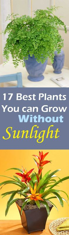 luckily there are plants that grow without sunlight and you can grow them indoors.