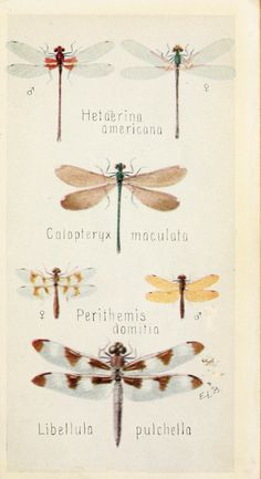 Field book of insects