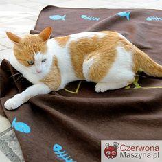 Koc dla kota DF Katz Cat Kitty Brown 70 x 90 cm - CzerwonaMaszyna.pl