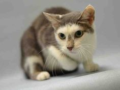 DOUGHNUT -  A1088592 - - Manhattan  *** TO BE DESTROYED 09/17/16 *** WHO…