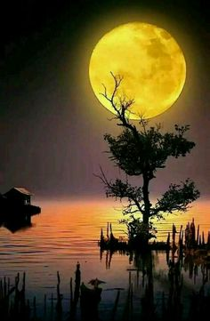 Beautiful moon over the lake! Moon Photography, Landscape Photography, Nature Pictures, Beautiful Pictures, Ciel Nocturne, Image Nature, Shoot The Moon, Moon Photos, Full Moon Pictures