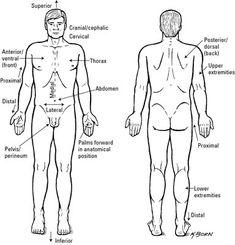 body regions medical terminology