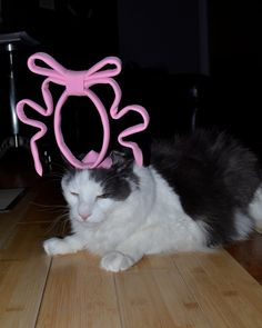Unhappy kitty with a pink bow hat thing. Princess Beatrice Cat Fascinator / Royal Kitty Hat. $15.00, via Etsy.