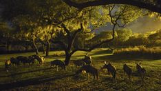 With Friday's debut of Kilimanjaro Safaris excursions into the evening, one of the new nighttime experiences at Disney's Animal Kingdom, we are eagerly awaiting to see your excitement as you engage in the magic of nature at night.