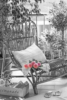 Backyard peace with pink
