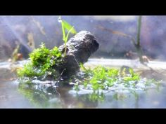 Paludarium Ecosphere WITH FISH - YouTube