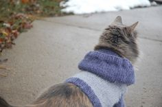 Molly sporting the awesome cat hoodie I made her :)