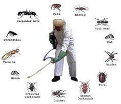 الأمانة المثالية | لخدمات التنظيف ونقل الاثاث ومكافحة الحشرات والنمل الأبيض وكشف تسربات المياة وتسليك المجاري - Part 3