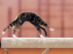 Olimpiyat birincisi kedi