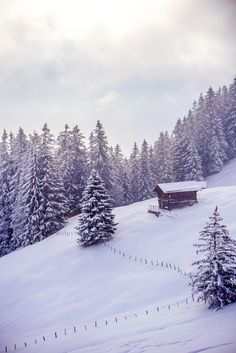 Swiss Alps, Murren Switzerland, Hiking, Mountains, Vacations, Nature, Travel, Snow, Outdoor