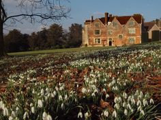 Snowdrops in the grounds of Chawton House in Hampshire, the home of Jane Austen's brother, Edward