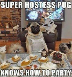 Everyone knows, Pugs are the best hosts! Barking mad @ www.jointhepugs.com #PugPower #PugLife #VotePug