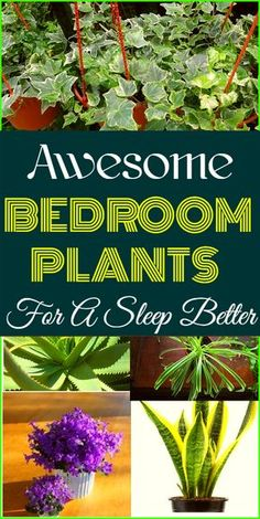 Wonderful bedroom plants to help you have a better sleep experience. Wonderful indoor plants for a better sleep experience. # better sleep # Plants for a better sleep Best Plants For Bedroom, Bedroom Plants, Inside Plants, Cool Plants, Planting For Kids, Have A Good Sleep, Rustic Chic Decor, Jade Plants, Spider Plants