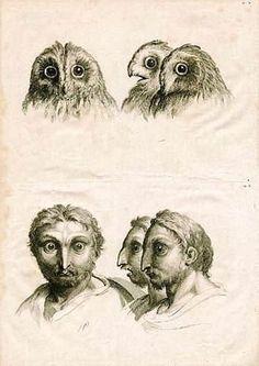 Como seríamos se tivéssemos evoluído de outros animais?