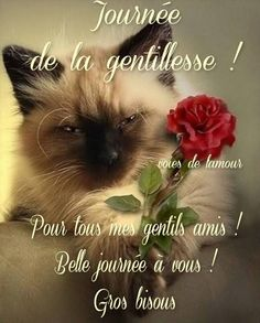 Journée de la gentillesse ! Citations Souvenirs, Image Fb, What's New Pussycat, Smoke On The Water, Love Your Neighbour, Bon Weekend, Cat People, Man Humor, Good Mood