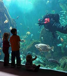 Invite children' family to visit the aquarium.  Children will be excite of seeing real sea animals.