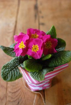 Wrap potted flowers with scrapbook paper
