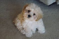 ZOE...SHICHON...TEDDY BEAR...