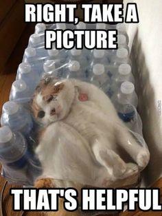 + free cat!