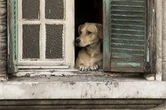 dog in window - Pesquisa Google