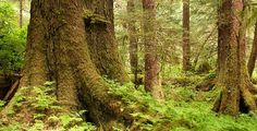Conservation in America's Tongass | The Nature Conservancy