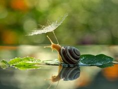 Snails looking at their reflections? Snails kissing? What about smelling a flower? These snails, shot by Ukrainian photographer Vyacheslav Mishchenko, appear to be creatures of deep sentience. These crisp, colourful, heartfelt photos look like they could be part of a fairy tale.