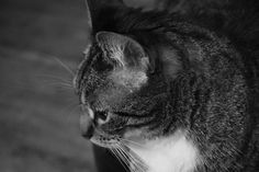 Black and white photography will always pull at my heart strings. Mittens, does the same to me. I love you my furry, beautiful cat!
