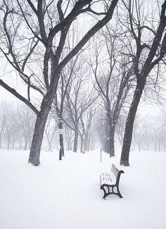 From Chantelle Grady Green Environment, Winter Light, Winter Christmas, Montreal, Winter Wonderland, Snow, Seasons, Outdoor, Beauty