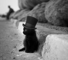 He was just too cute with his little top hat to not post.