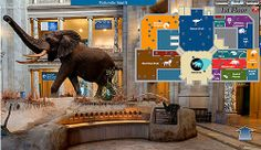 This is Amazing...Virtual tour of the Smithonian Museum of Natural History....http://www.mnh.si.edu/vtp/1-desktop/