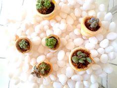 Vasinhos de mini suculentas.