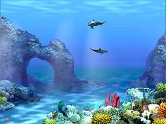 Moving Fish Backgrounds Free No Downloads Animated Wallpapers