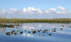 Una ruta en lancha aerodeslizadora por las marismas del Everglades National Park permite descubrir naturaleza virgen y fauna salvaje en estado puro. Recomendado!