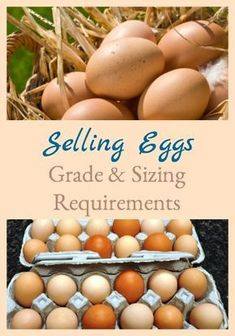 Here's what you need to understand when selling eggs in the US for grade & sizing requirements. Best Egg Laying Chickens, Baby Chickens, Keeping Chickens, Raising Chickens, Raising Ducks, Raising Goats, Backyard Poultry, Backyard Farming, Chickens Backyard