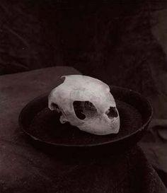 Marcus Leatherdale, Sea Turtle Skull