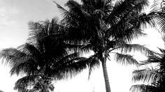 Palm tree #spotthepenguin